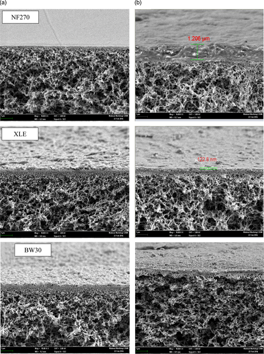 Cross-sectional FESEM images of NF270 membrane, XLE membrane and BW 30 membrane: (a) neat; (b) fouled.