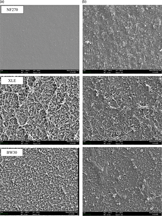 Top surface FESEM images of NF270 membrane, XLE membrane and BW 30 membrane: (a) neat; (b) fouled.