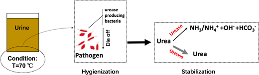 Process for disinfection and stabilization of human urine under thermal storage of 70 °C.