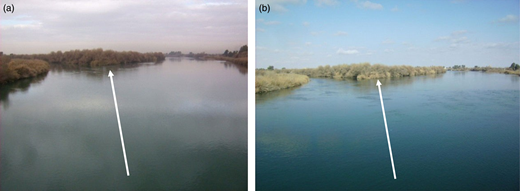 Pictures of the same stretch of the Euphrates River in Deir Ez-Zor in (a) January 2010 and (b) February 2011. Arrows indicate the fluvial island sighted from the bridge.