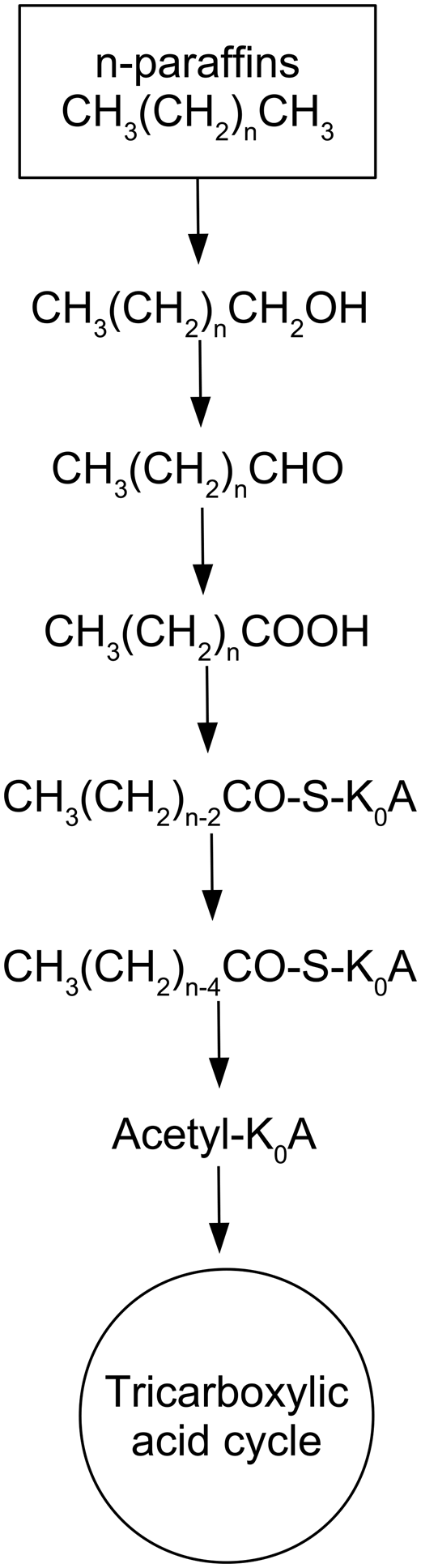 Scheme of paraffin oxidizing.