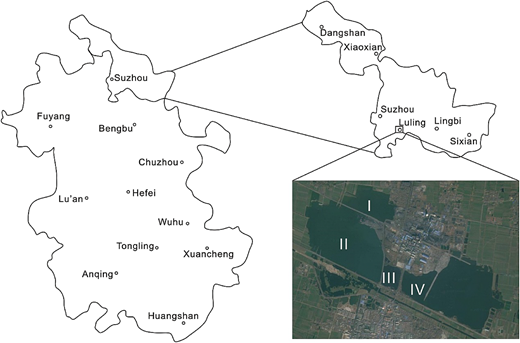 Location of the study area (I, II, III and IV are sample locations in subsidence water areas around the Luling coal mine).