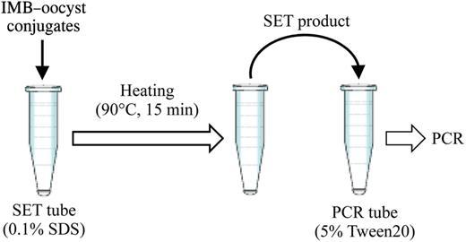 SET applied to IMB–oocyst conjugates. SET, surfactant extraction treatment; IMB, immunomagnetic bead.