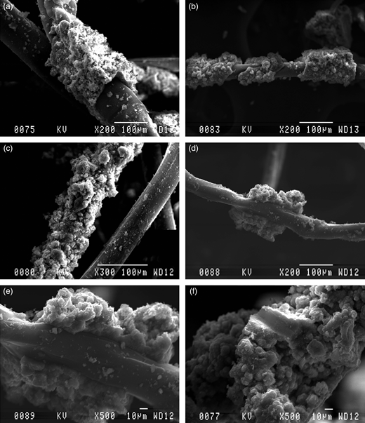 The biofilm on the geotextile fibres serving as support material showing the crystal structure of the ferric iron precipitate.