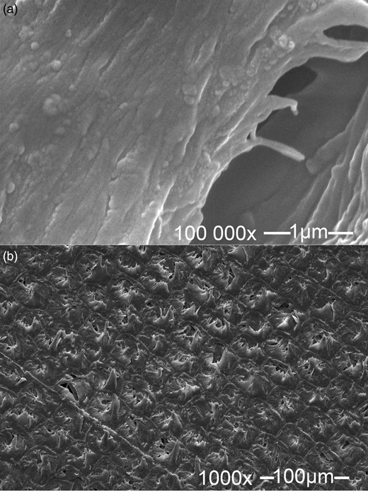 FESEM micrograph of AY132 adsorbed (a) and natural (b) red pine sawdust particles (10 kV).