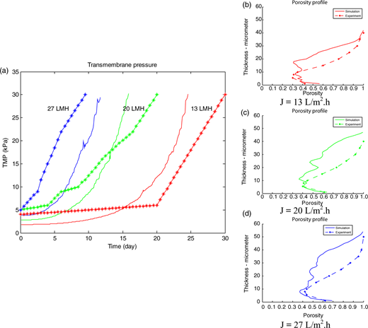Comparisons of the TMP and porosity profile between experimental and simulated data (*: experimental data, ——: simulated data).