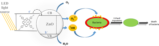 Antibacterial activity of ZnO/TPPS against the cell wall of bacteria.