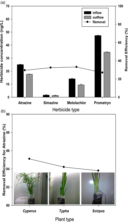 (a) Mean concentration and removal rates for atrazine, simazine, metolachlor and prometryn by the hybrid phytosystem. (b) The mean removal efficiencies for atrazine by Cyperus alternifolius L., Typha latifolia L., and Scirpus validus L., under controlled laboratory conditions.