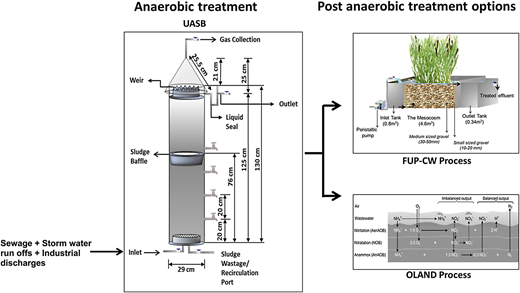 Experimental plan for treatment of sewage using UASB followed by two post-anaerobic treatment options, namely the FUP-CW and OLAND processes.