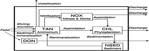 Conceptual model of N input, transformation and removal in intensive pond (Source:Burford & Lorenzen 2004). TAN: Total ammonia nitrogen; NOX: Nitrogen oxides in the form of NO2 and NO3; CHL: Chlorophyll; NSED: Nitrogen in sediment and DON: Dissolved organic nitrogen.