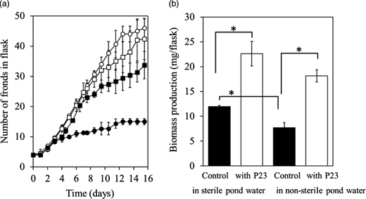 Effects of P23 (0.05 mg dry weight/mL) on the growth of L. minor in sterile or non-sterile pond water for 15 days. (a) Changes in number of fronds growing in sterile (▪, □) or non-sterile (●, ○) pond water without (▪, ●, control) or with P23 cells (□, ○). (b) Biomass production (final minus initial dry weight) of L. minor in sterile or non-sterile pond water with or without P23 cells. Values are mean ± SD (n = 3). *Significant difference (P < 0.05) between dry weights.