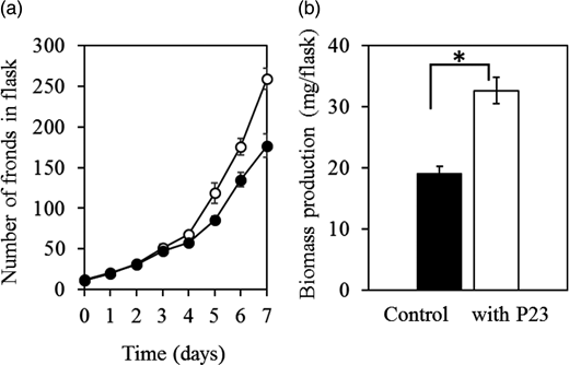 Effects of P23 (0.15 mg dry weight/mL) on the growth of L. minor in secondary effluent for 7 days. (a) Changes in the number of fronds growing without (●) or with P23 cells (○). (b) Biomass production (final minus initial dry weight) of L. minor during 7 days. Values are mean ± SD (n = 3). *Significant difference (P < 0.05) between treatments.