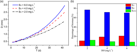The effect of dissolved oxygen on aerobic granular sludge: (a) granule size; (b) percentage of biomass.