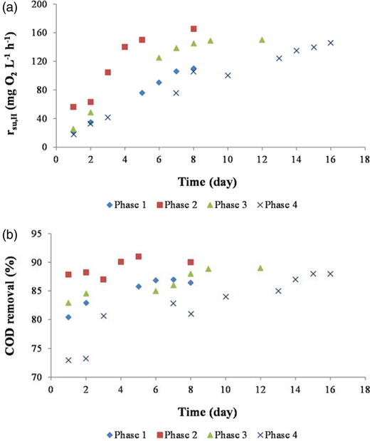 (a) Evolution of COD degradation rate (rsu,H) obtained for heterotrophic biomass from MBR, and (b) COD removal during the four start-up phases. Phase 1: HRT = 6 h and MLSS = 4,000 mg L−1; Phase 2: HRT = 10 h and MLSS = 4,000 mg L−1; Phase 3: HRT = 6 h and MLSS = 7,000 mg L−1; Phase 4: HRT = 10 h and MLSS = 7,000 mg L−1. COD (chemical oxygen demand), HRT (hydraulic retention time), MLSS (mixed liquor suspended solids).