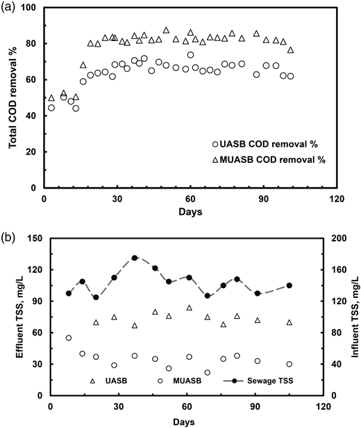 (a) Total COD removal efficiency and (b) influent and effluent TSS in UASB and MUASB reactor during the pilot-scale study.