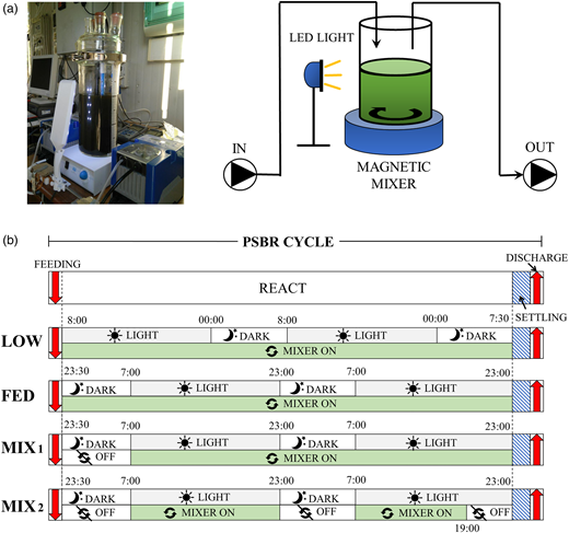 (a) Laboratory-scale PSBR; (b) operating cycles during the four regimes (LOW, FED, MIX1, MIX2).