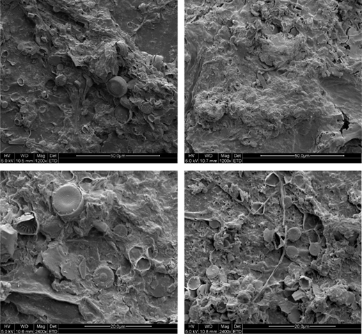 The SEM images of biofilm before and after adsorption (1,200× and 2,400×).
