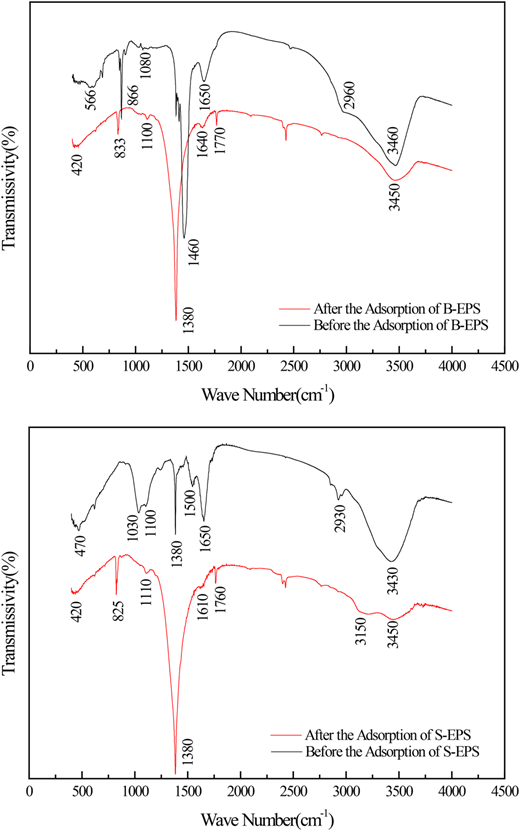 FTIR of S-EPS and B-EPS before and after adsorption.