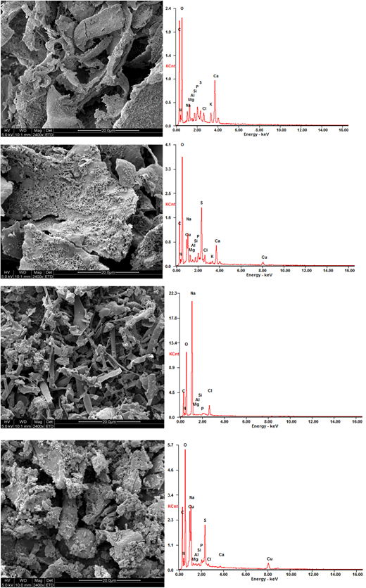 SEM-EDX images of the S-EPS and B-EPS.