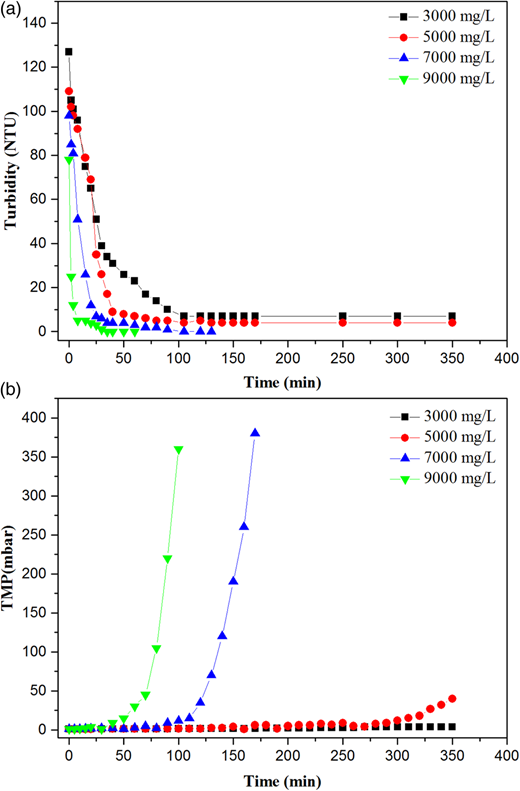 Effects of sludge concentration on (a) effluent turbidity and (b) TMP at a constant aeration rate (5 L/min).