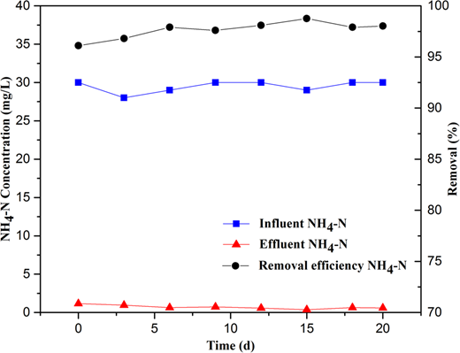 Changes of influent and effluent NH4–N concentration and NH4–N removal.