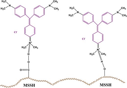 Schematic of chemisorption of CV and MSSH.