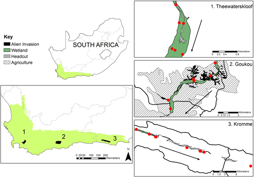 The three study palmiet wetlands in their respective catchments (back areas labelled 1–3) in the Cape Floristic Region of South Africa (light green). Provinces are indicated with grey lines in the map of South Africa. Catchment boundaries are represented by solid black lines. The three insets may not show the catchment boundary due to the small size of the wetland relative to the catchment. Invasion by alien trees is represented in solid black in the insets, whereas 'headcut' refers to gully erosion. The direction of riverflow within each catchment is indicated by arrows. Water quality sampling points are indicated with red points in each catchment. Please refer to the online version of this paper to see this figure in colour: http://dx.doi.org/10.2166/wst.2018.389.