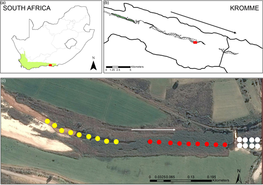 (a) The map of South Africa indicates the location of the Kromme catchment (red box) within the Cape Floristic Region (green shaded area) – also see Figure1. (b) The Kromme River inset shows the location of the study transect (red box). (c) The transect used for the field survey in the Kromme catchment. Points indicate water sampling points; yellow indicates degraded and red pristine parts of the wetland; white indicates points at the outflow of the weir. The river flows approximately west to east, as indicated by the arrows. Please refer to the online version of this paper to see this figure in colour: http://dx.doi.org/10.2166/wst.2018.389.
